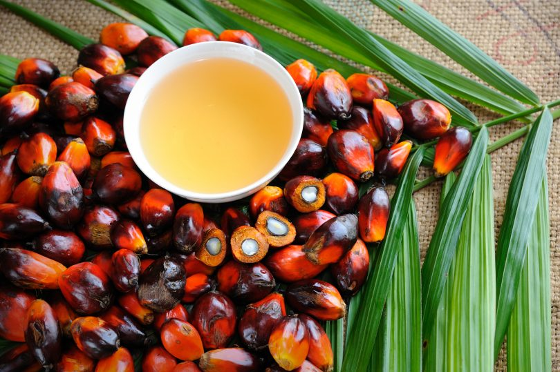 Conflict Palm Oil