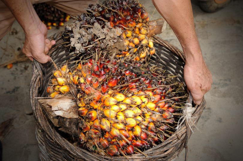 The Scoop on Palm Oil Products | Socially Conscious Living