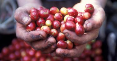 Fair Trade Certification
