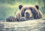 Sad Brown Bear - Beginner's Guide to Menstruation