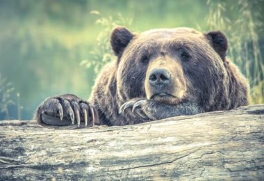 Sad Brown Bear - Beginner's Guide to Menstruation